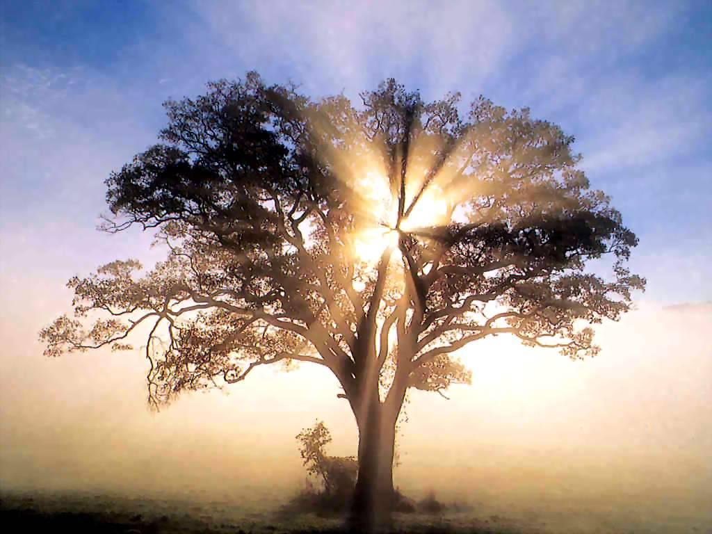 Let your inner light shine...